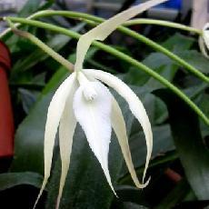 orchid es achat plantes d int rieur par correspondance