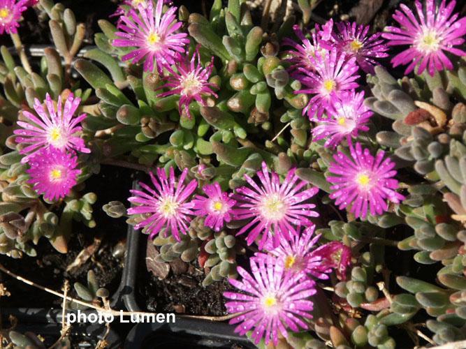 Plante grasse exterieur vivace 28 images plante for Plante verte vivace exterieur