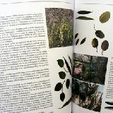LIVRE, L'olivier dans les Pyrénées Orientales