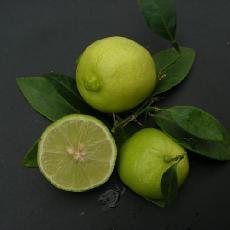 Citrus aurantifolia  'Citron Gallet'