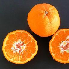 Citrus reticulata  'Ponka'