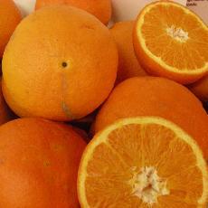Citrus sinensis  'Ricalate'