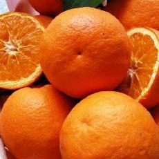 Citrus sinensis  'Hamlin'
