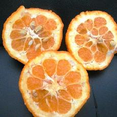 Citrus aurantium  'Bouquetier de Nice'