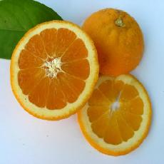 Citrus sinensis  'Salustiana'
