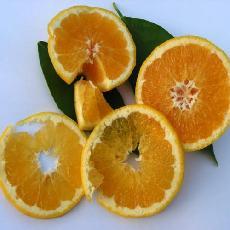 Citrus sinensis  'valencia late'