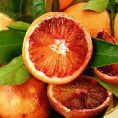 Citrus sinensis  'Moro'