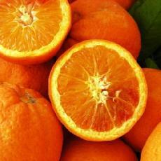 Citrus sinensis  'Maltaise demi sanguine'