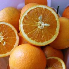 Citrus sinensis  'Maltaise blonde'