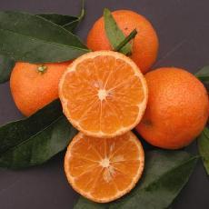 Citrus clementina  'Caffin'