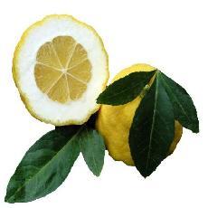X Citroncirus  'Citrumelo 4475'