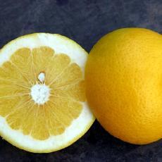 Citrus paradisi  'Shambar'