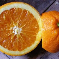 Citrus  sinensis  'navel'