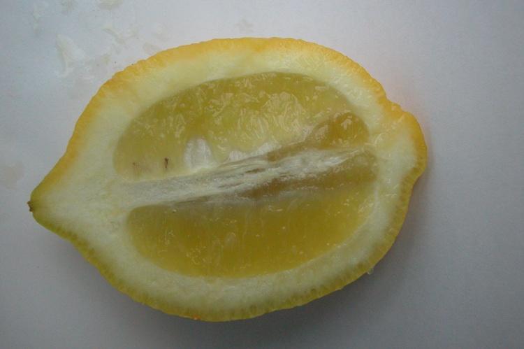 Citrus limon  'Fleurs d'oranger'