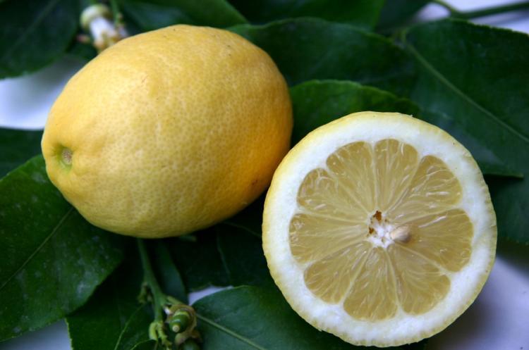 Citrus limon  'Fino'
