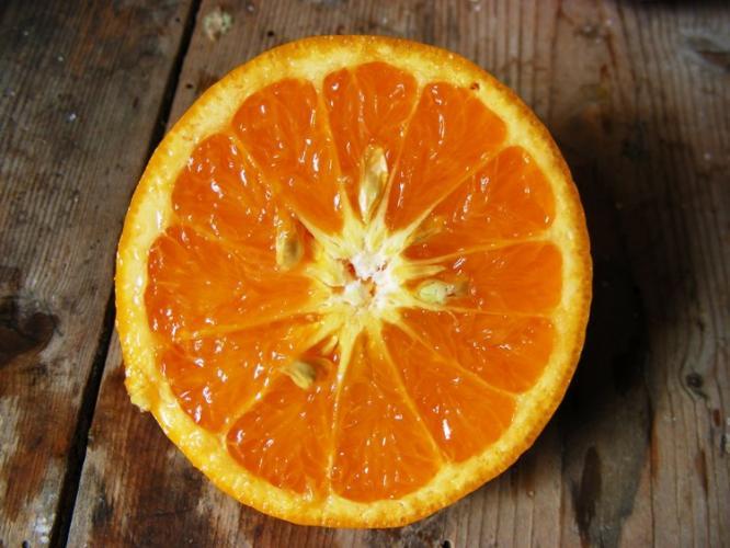 Citrus reticulata  'Kara'